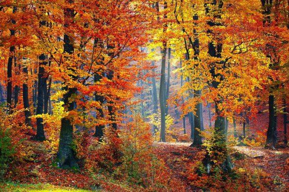 admirer les couleurs de l'automne