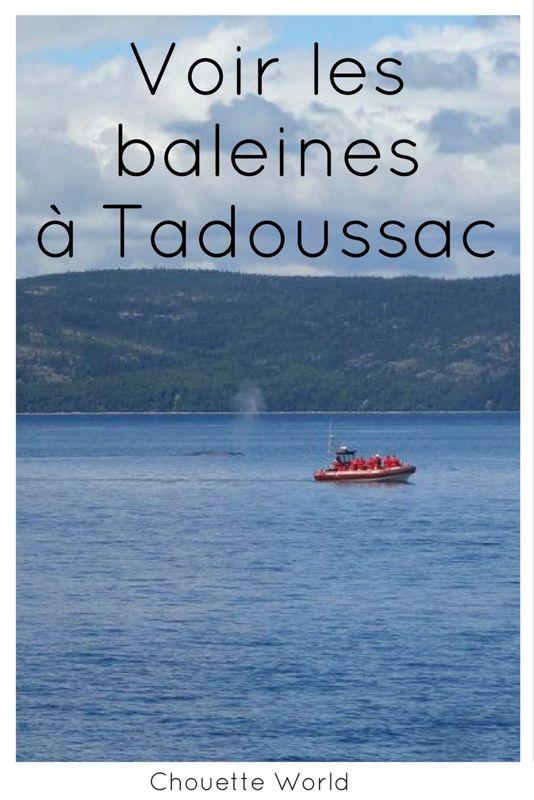 Voir les baleines a Tadoussac : récit et conseils pratiques