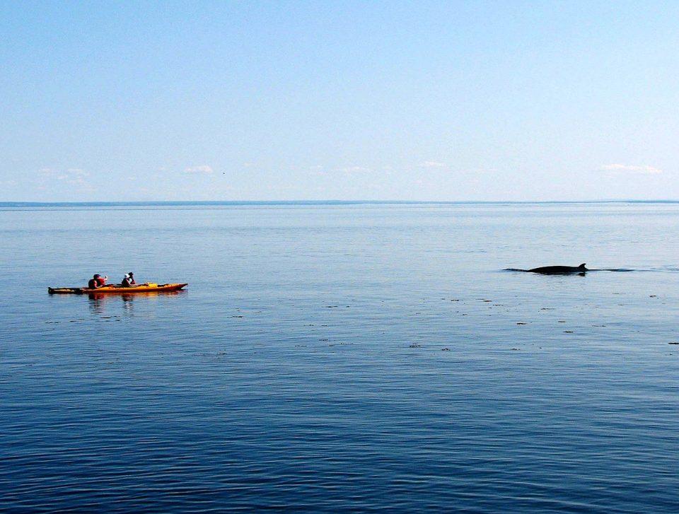 voir les baleines a tadoussac