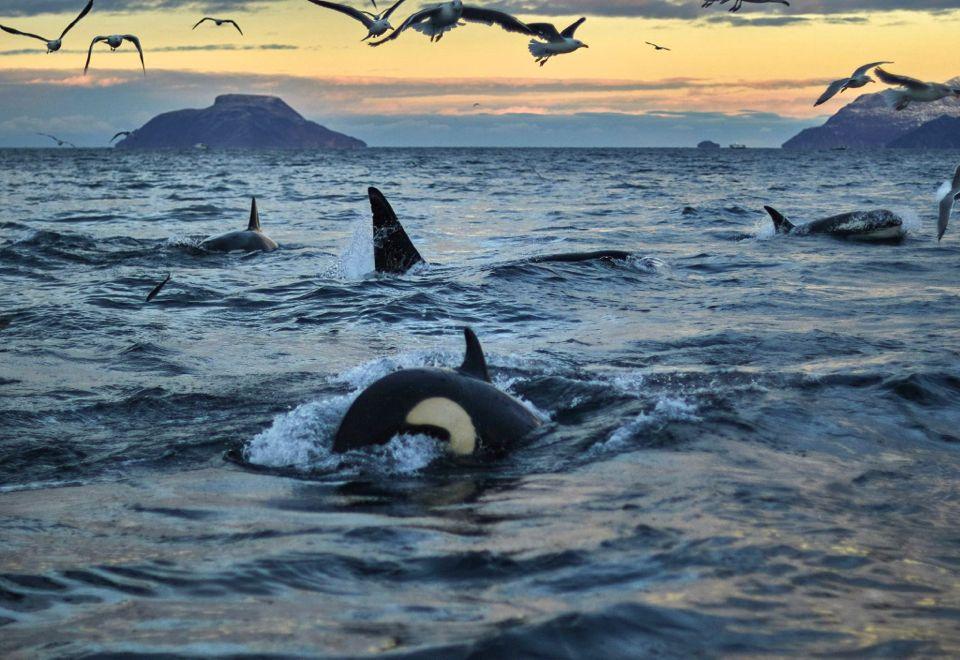 baleines en norvege tromso