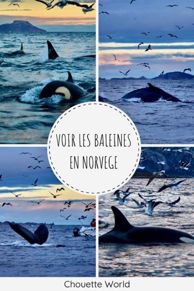 Voir les baleines en Norvège