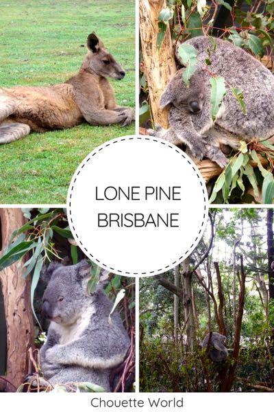 Visiter le lone pine koala sanctuary