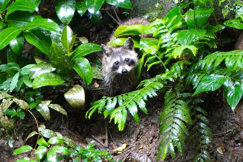 zoo des mamelles guadeloupe