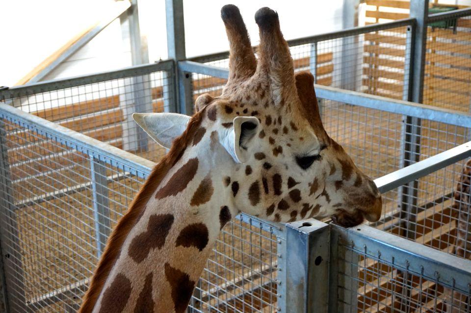 parc animalier d'Auvergne