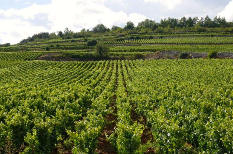Visiter la Cote de Beaune en Bourgogne