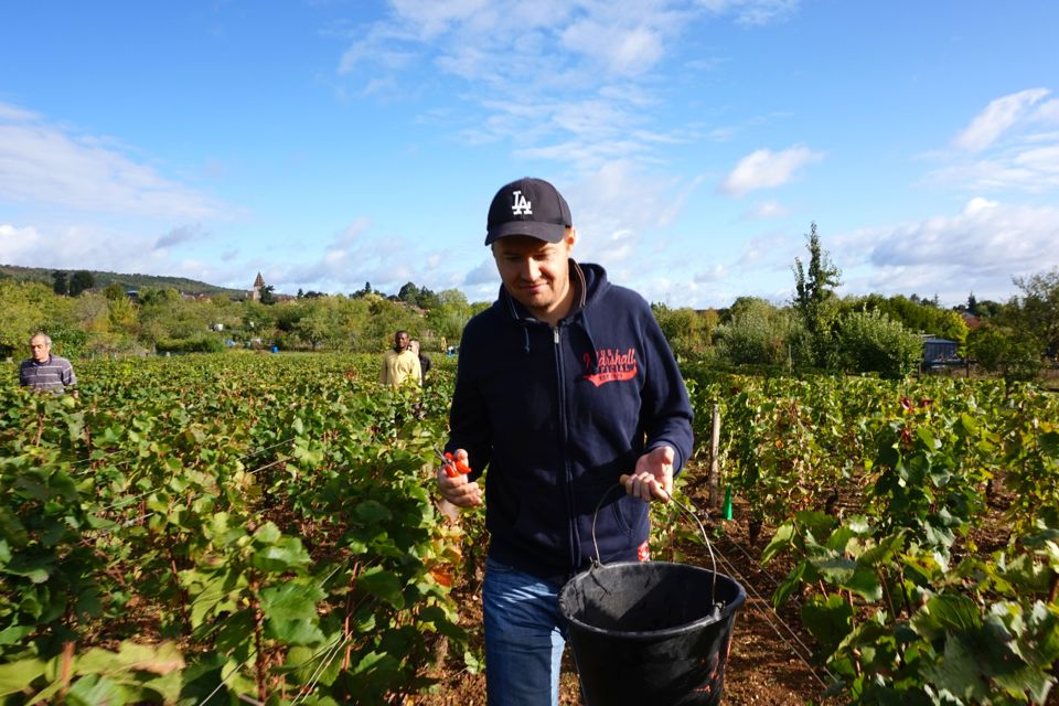 vendanges clos saint louis