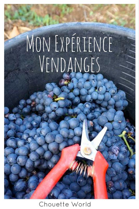 Expérience de vendanges en Bourgogne