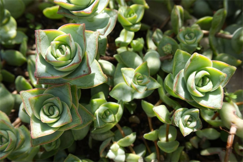 3 jours à Belfast : jardin botanique