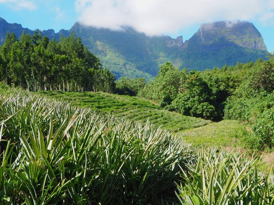 route des ananas Moorea